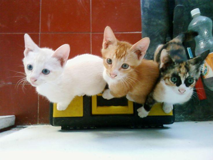 The Trio ;)