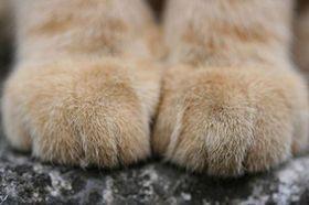 【72枚】 猫の手可愛すぎwwwwwwwwwwww ラビット速報