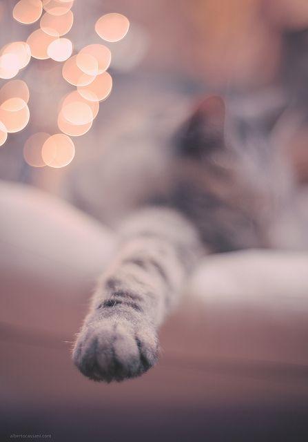 .: Kitty Cats, Cats Paw, Cats Naps, Kitty Paw, Kitty Kitty, Sleep Beauty, Christmas Lighting, Cats Lady, Baby Cats
