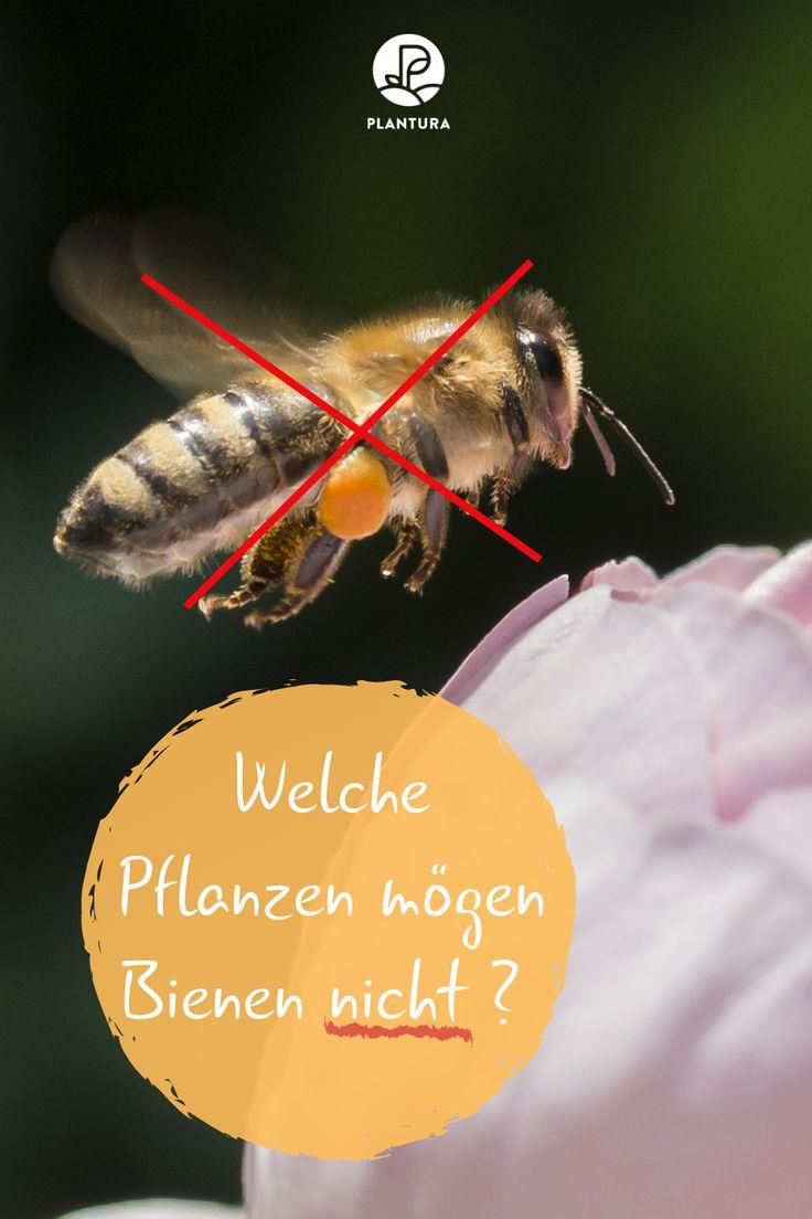 Welche Pflanzen mögen keine Bienen?