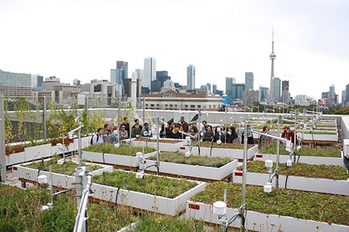 Green roof research at the Daniels Faculty receives NSERC grant   The John H. Daniels Faculty of Architecture, Landscape, and Design