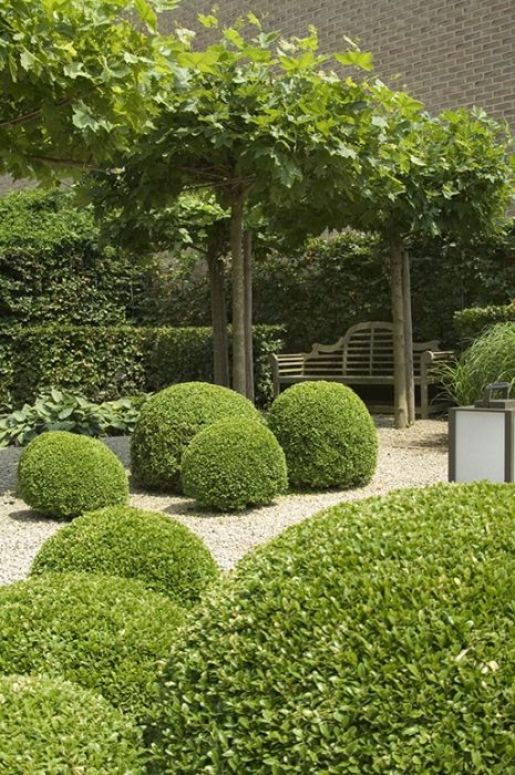 London plane trees form a structured shade pergola with a Lutyens bench, immaculate box balls, hostas and grasses.