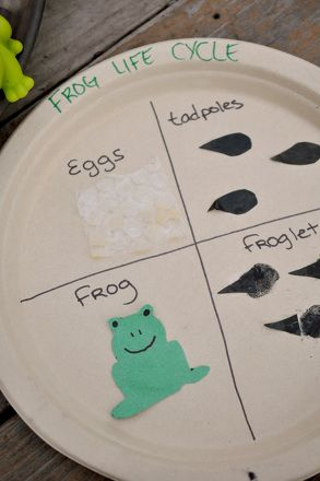 Here's a simple craft activity that can help your youngster better visualize the life cycle of a frog as a circle.