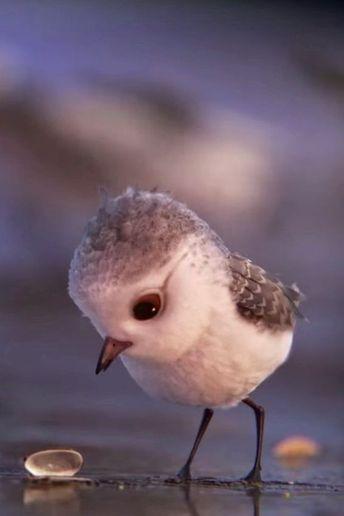 Oscar-Gewinner: Alle Eltern sollten diesen Kurzfilm über einen kleinen mutigen Vogel sehen