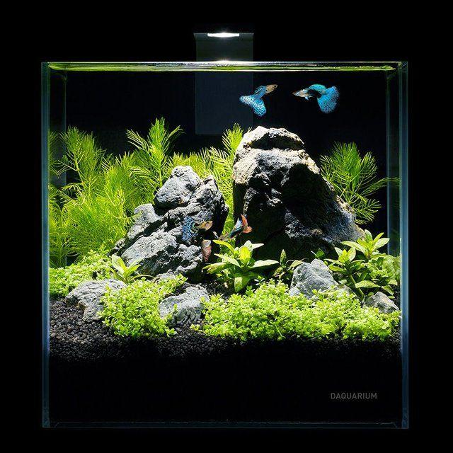 (17) Fancy - Desktop Pico Aquarium Set