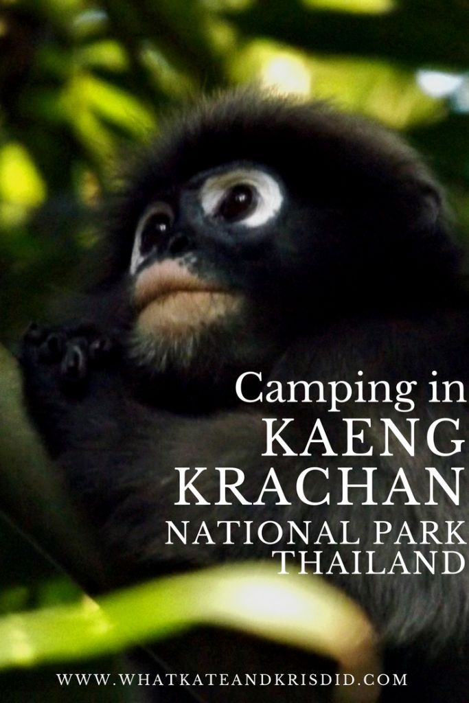 Our trip to Kaeng Krachan national park, Thailand, including how to visit and camp there.