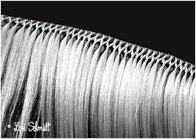 Tightly and neatly done! #horse #horses #braids #braiding