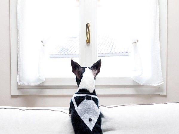 NinaWearsNina luxury dog wear designed and made in Italy.