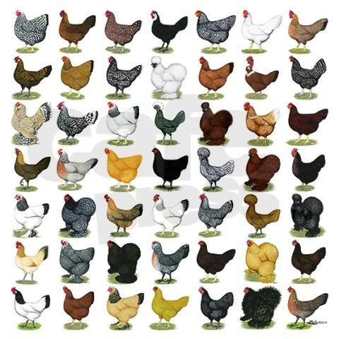Chicken Breeds Chart | chicken breeds chart. 49 Hen Breeds Boxer Brief