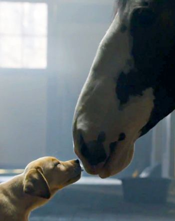 "Budweiser ""Puppy Love"" Super Bowl Commercial: Watch Best Buds Ad Now! - Us Weekly"