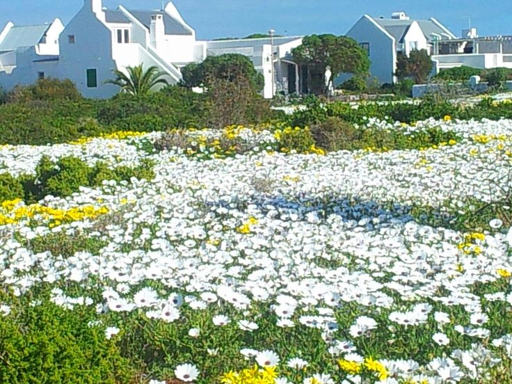 #Paternoster in spring - West Coast - South Africa. #paternoster