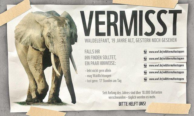 Seit Anfang des Jahres verschwanden über 300 Nashörner und über 10.000 Elefanten aus den Savannen und Wäldern Afrikas. Hilf uns bei der Suche: http://www.wwf.de/wildtiermafiastoppen/