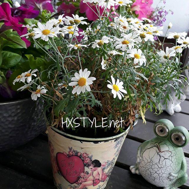 KOTI&SISUSTUS. Puutarha, Parveke. Minun SISUSTUS, KESÄ -17 Tyyliä, PARVEKE ja Kukat. Ihanat MARKETAT..Seuraan Uutuuksia&Trendejä kuten mm. ASUNTOMESSUJA. Poimin Itselleni, KOTI&Sisustyyliini sopivia Juttuja. Tykkään&NAUTIN. Nähdään...HYMY #blogi #kotijasisustus #elämäntapa #sisustusblogi #marketta  #puutarha #parveke #piha #kukat #kesä #tyyli #seuraan #uutuudet ☺