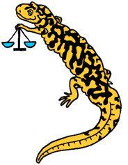 Math Problem for Children Tyger Measures Salamander