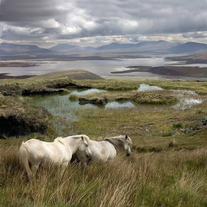 """theiamchronicle: """" Achill Island, County Mayo, Ireland """""""
