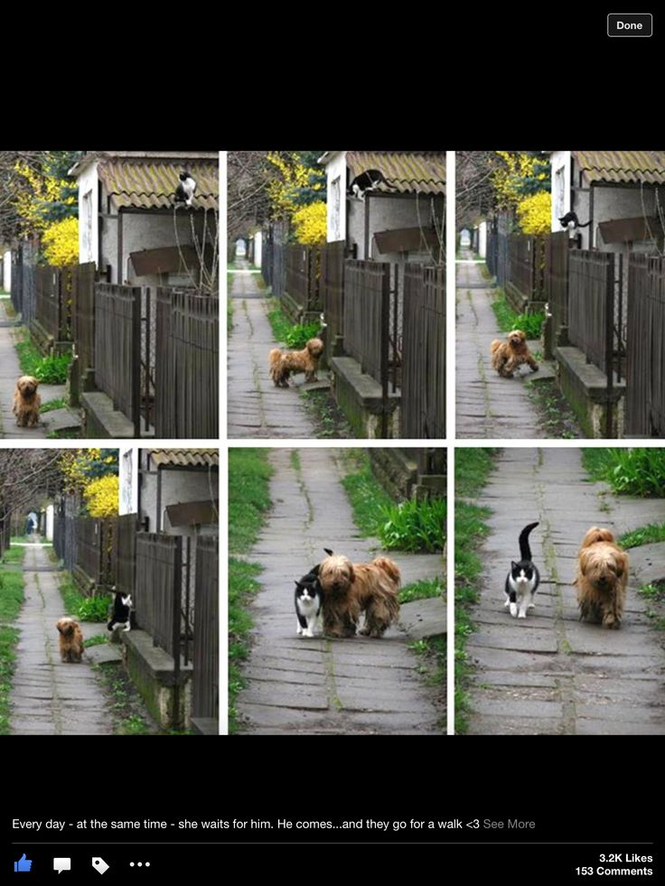 Dog waits for cat so hey can walk together.....too cute