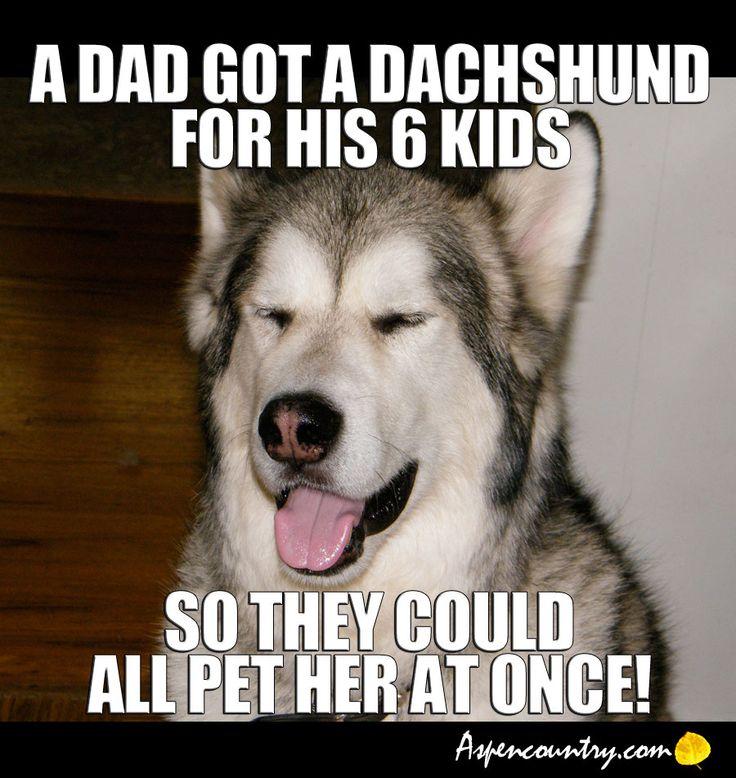 Funny Dog Joke Meme : Easygoing dog joke a dad got dachshund for his kids