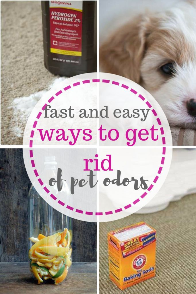 Cleaning Cleaning Hacks Pet Cleaning Hacks Pet Care Tips And