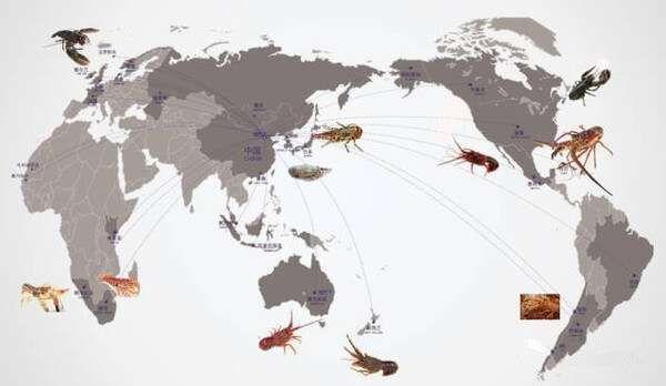 史上最全的龍蝦種類大全,看誰還敢忽悠你!