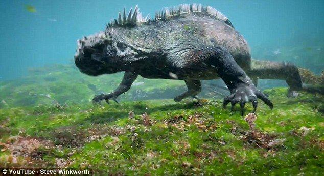 Ιγκουάνα - Γκοτζίλα... προκαλεί τρόμο στο βυθό της θάλασσας