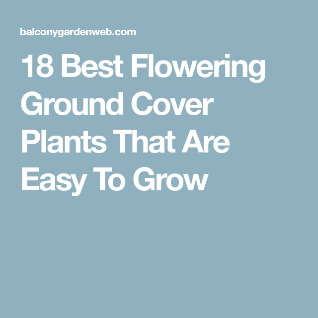 18 Best Flowering Ground Cover Plants That Are Easy To Grow