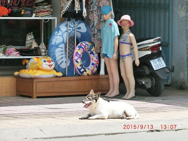 ベトナム人って、街中で人をガン見する。 日本のヤンキーだったら喧嘩になるレベルなのかな。 奥様は最初びびってた。 俺達だけ見られてるのかと思ったら皆だった。  すごい関係ないけど、画像はマネキンにガン見される犬。 ベトナム・ニャチャン