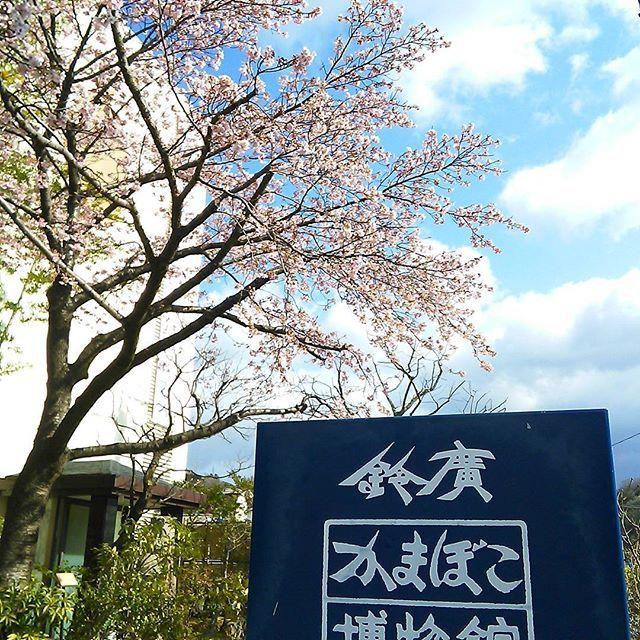 【rumphius_obidome】さんのInstagramをピンしています。 《娘達と女3人#箱根 日帰り旅♪ #鈴廣かまぼこの里 こちらで作らせてもらえる手作り#かまぼこ &#竹輪 が最高に美味しいのです♪ この後は#温泉 ❤ #桜 が綺麗です♪ 土曜参観の振替休日満喫中(*^-^*)》