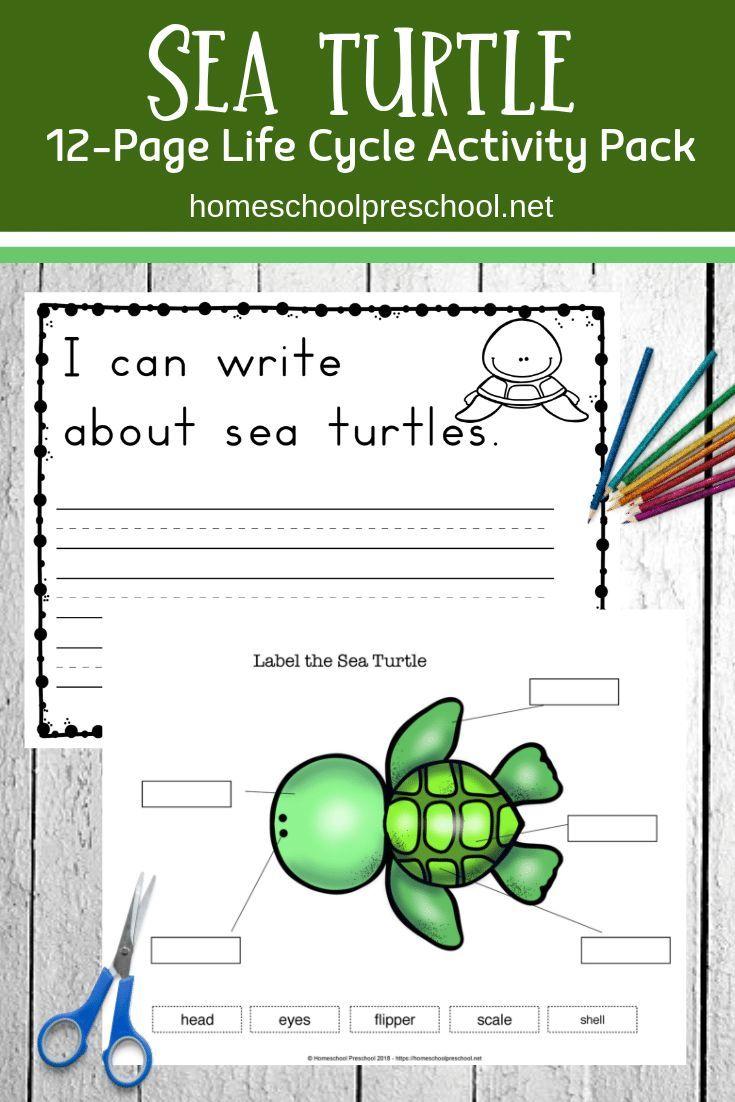 Preschool Sea Turtle Life Cycle Printable Unit Study Turtle Life Cycle Sea Turtle Life Cycle Turtle Life [ 1102 x 735 Pixel ]