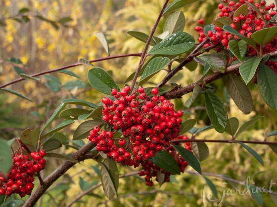 44 besten Prosjekt 1 Bilder auf Pinterest Gärten, Gartenpflanzen - gartenpflanzen
