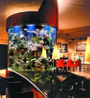 17 best images about aquarium ideas on pinterest for Fish tank bar