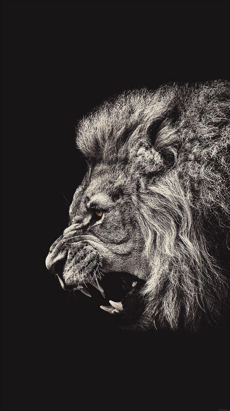 モノクロ ライオン モノクロの壁紙画像