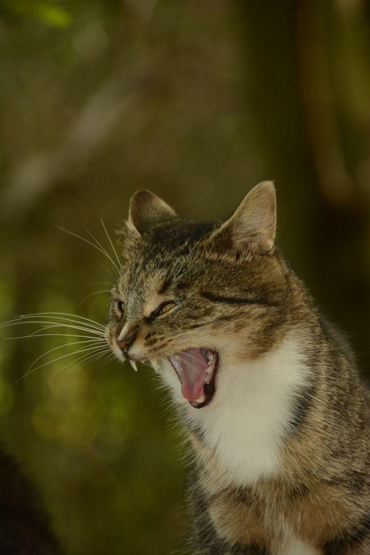Galerie | Kočičí uličnice - portréty pouličních koček | Prima ZOOM
