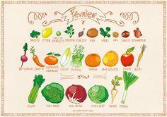 Calendrier des fruits et légumes de février. Pissenlit.