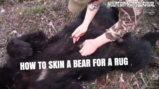 How To Skin A Bear for a rug In The Field Video