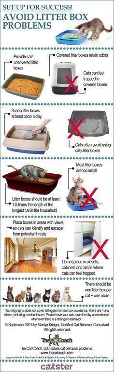 ♥️ Cat Care Tips ♥️  Great infographic from feline behaviorist Marilyn Krieger shows 5 simple steps to avoiding litter box problems! #CatLitter #catlitterboxtips