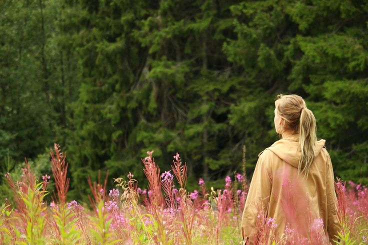 Fireweed , summer , Sweden ,