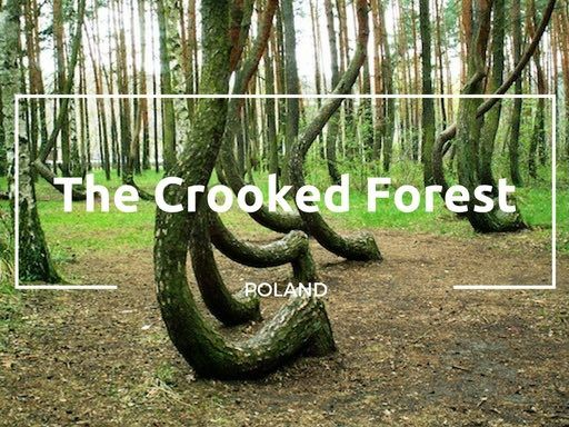The Crooked Forest in Gryfino | A Mysterious Place in Poland
