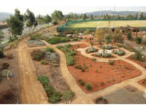 california native garden - Google Search