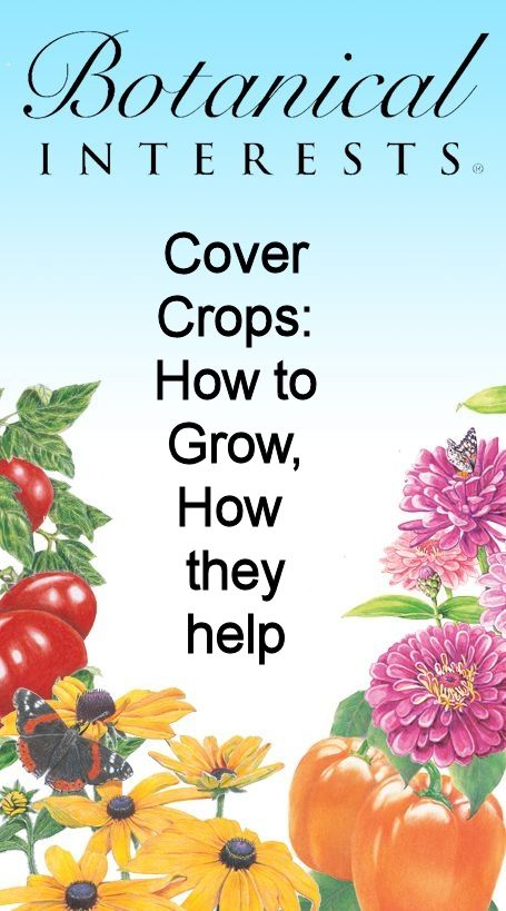 Cover Crops ... learn how to grow them and WHY they are a great idea for your garden!