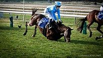 Ban Jumps Racing in Australia ! Please SIGN and SHARE !!! - Care2 News Network