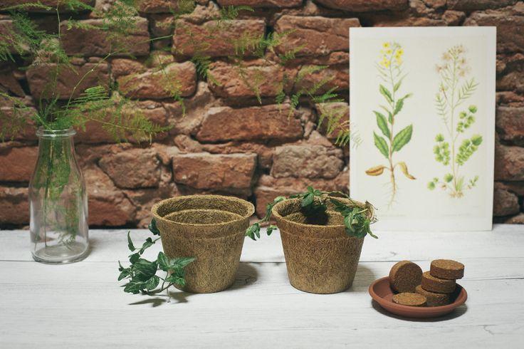 MyGarden - Tutto pronto per la semina  Set di 4 vasi in fibra di cocco biodegradabili con sottovasi e sostituto di terra. Con questo set potrai dare vita ai Green Kit in un battibaleno! Non contiene semi.