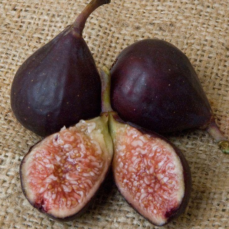 Violette de Bordeaux Fig Tree (Dwarf). This variety has strong raspberry jam notes.