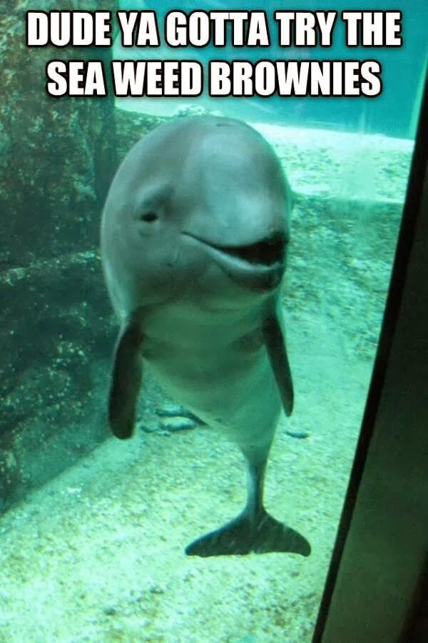 Image result for dolphin smoking joint