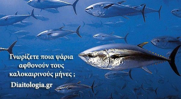 Γνωρίζετε ποια ψάρια αφθονούν τους καλοκαιρινούς μήνες ; | Διαιτoλογία