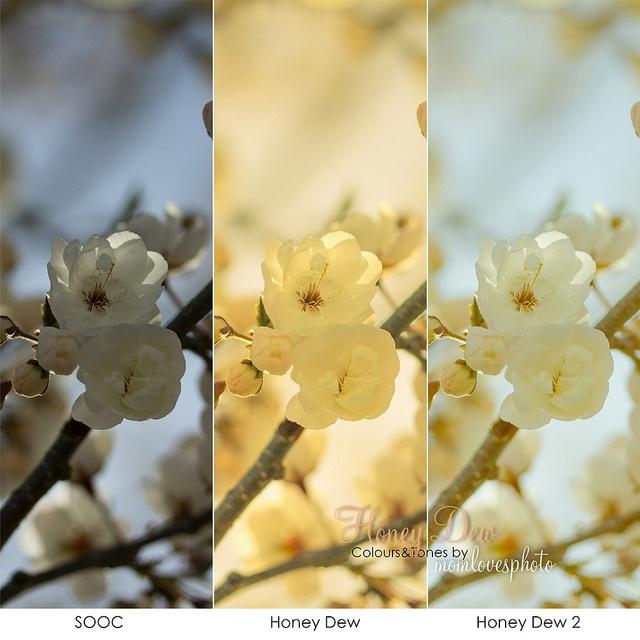 Creative Color in Lightroom 4: Honey Dew