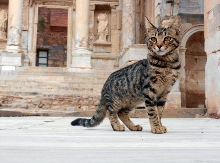 エフェソス / Έφεσος / Ephesos - Find Travel