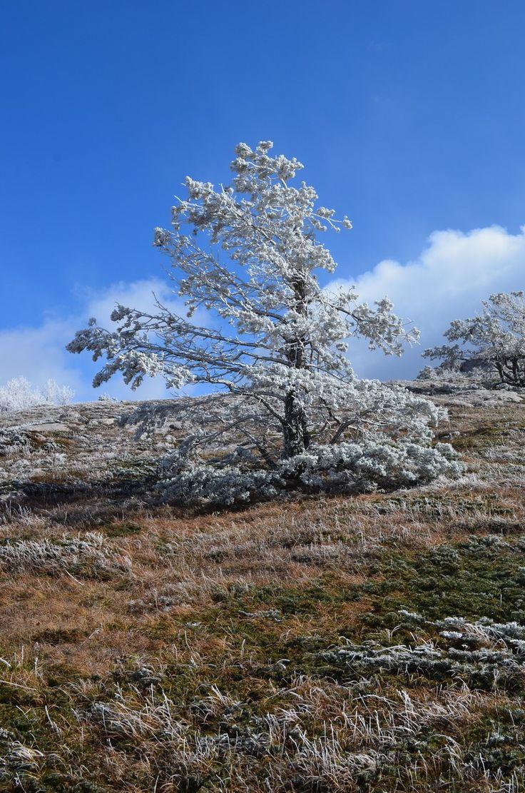 Сказочное дерево.  Рождественский тур «Пещеры Чатыр-Дага», Hikeup