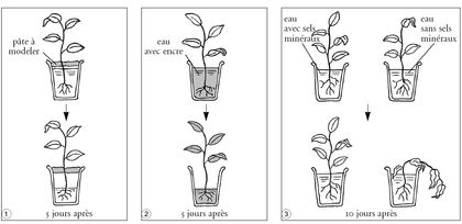 Les besoins d'une plante