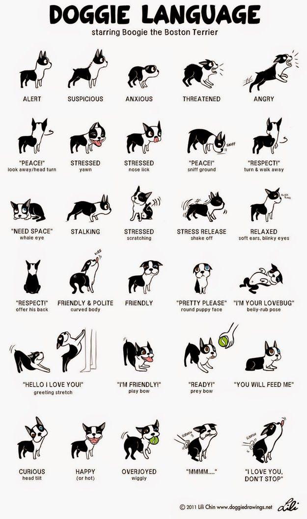 dog body language http://www.rosyandrocky.com/ pet supplies