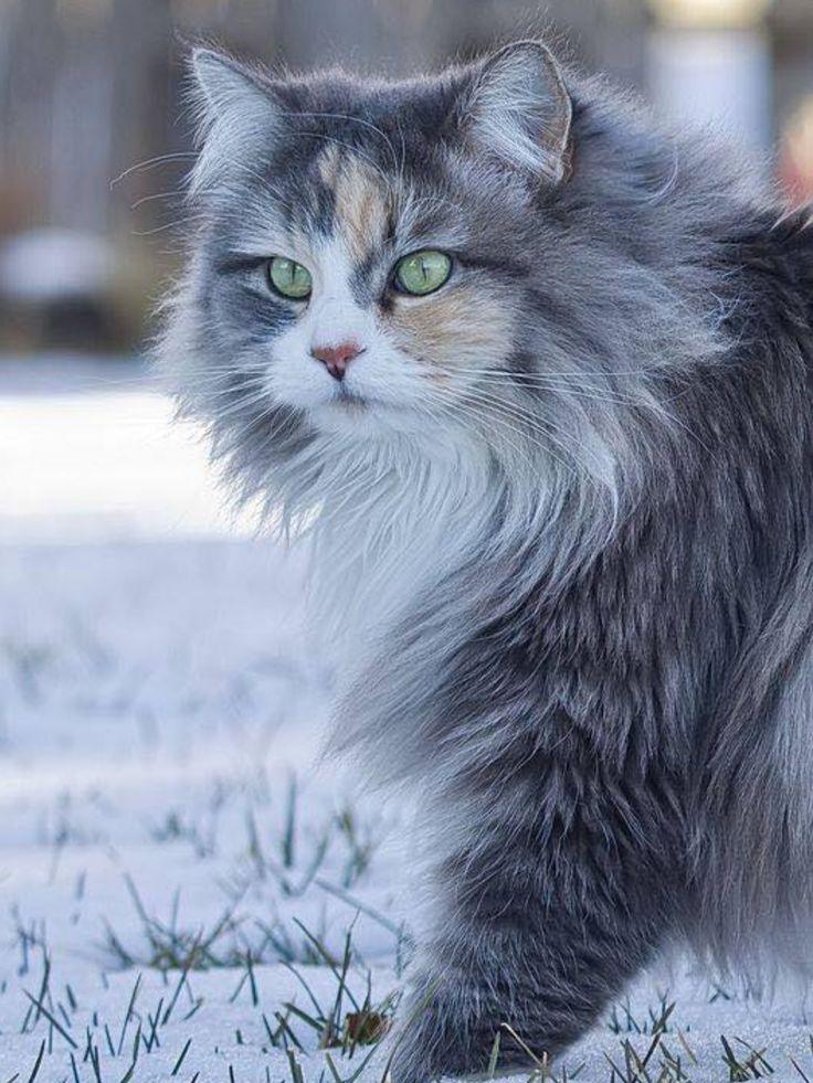 #CAT##ANIMALS#